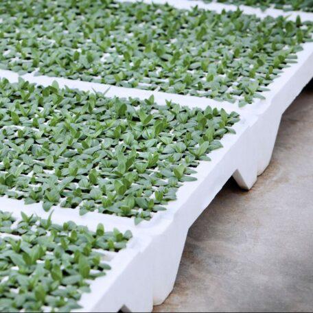 Green-Seedlings-grow-in-EPS