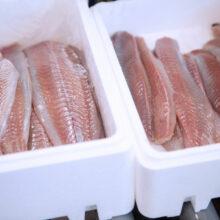 BEWI-fish-boxes-IMG_4332-edit